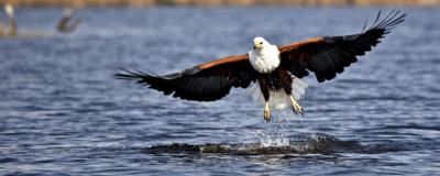 Summer Birding