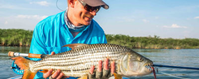 Discover the formidable African tigerfish