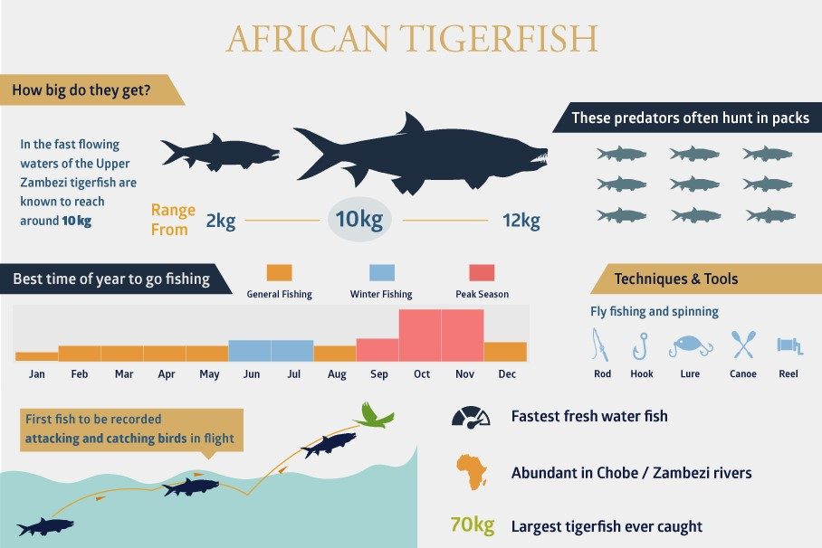 Discover the formidable African tigerfish - Zambezi Queen