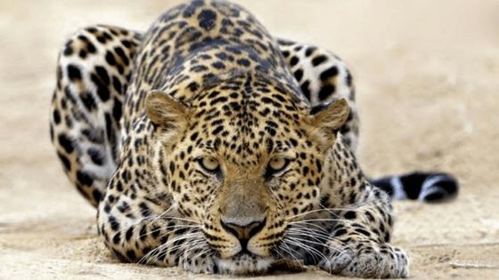 15 animals to see on a Botswana River Safari