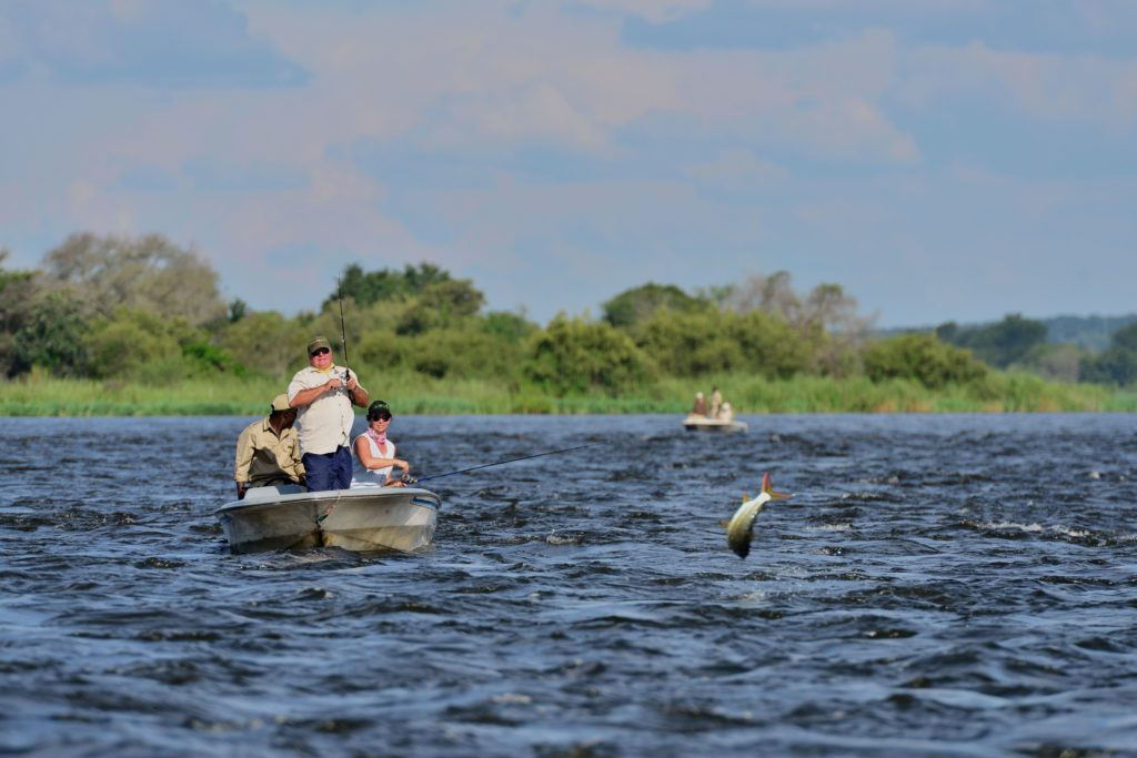 Tiger fishing on the Chobe