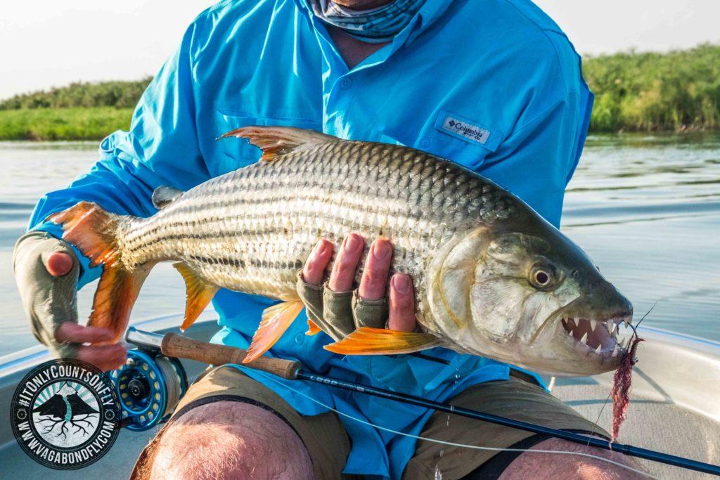 Chobe River Tiger fishing
