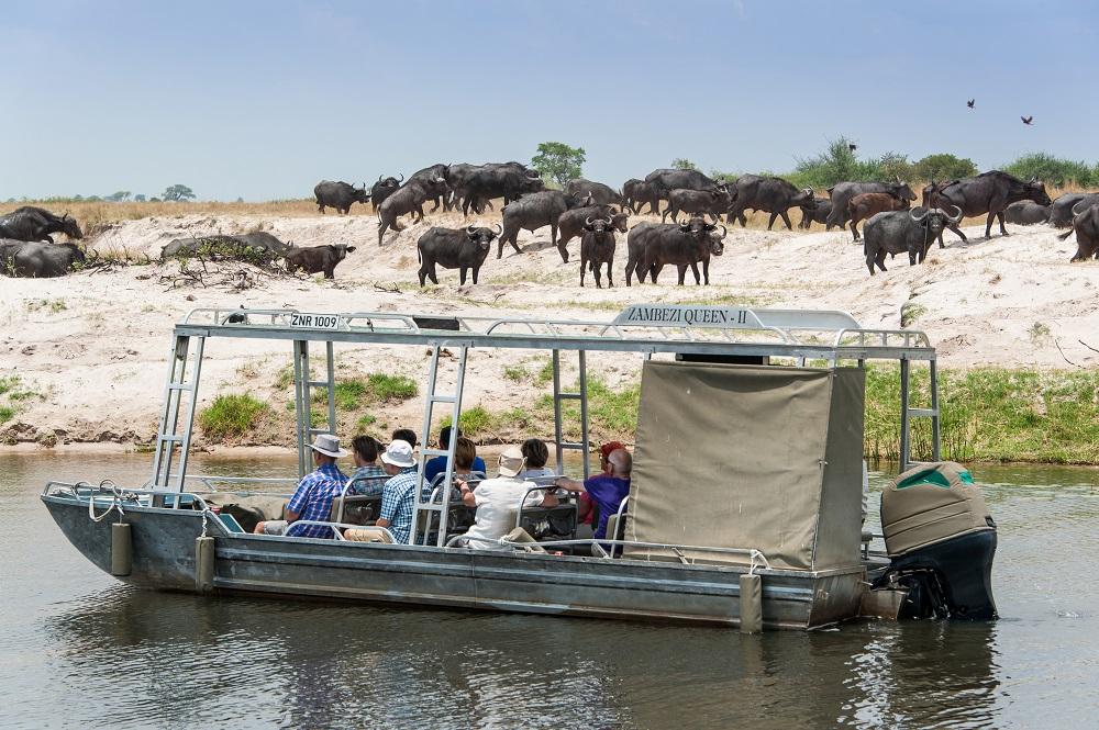 Chobe River cruising
