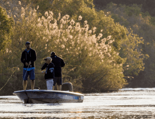 Fall in love with Chobe hook, line and sinker