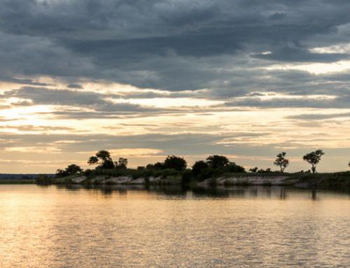 What to Expect on a Chobe River Safari in the Green Season