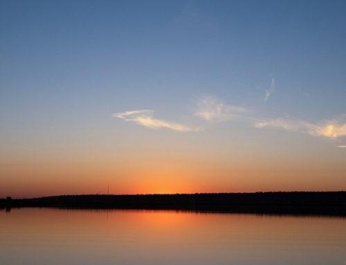 7 reasons why you should experience a Chobe River Safari