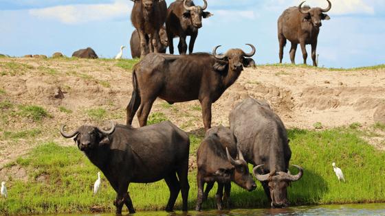 Zambezi Queen Collection   Community Initiatives
