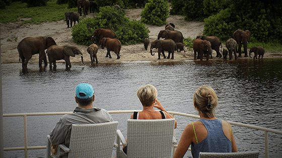 Zambezi Queen | Chobe National Park