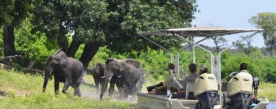 Ichingo Chobe River Lodge Game Viewing