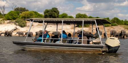 Chobe Elephants from the tender boat